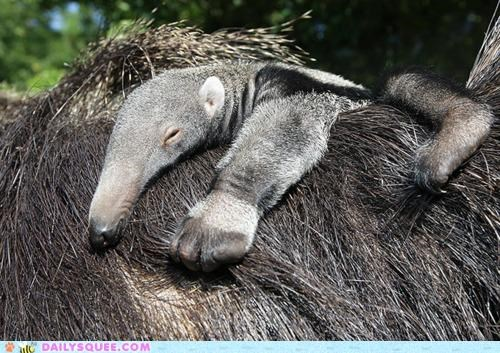 anteater,anteaters,baby,pun,tale,The Hobbit,there and back again