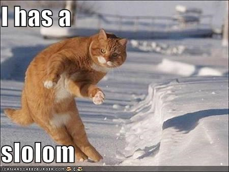 caption captioned cat i has invisible ski skiing slalom - 4947668992