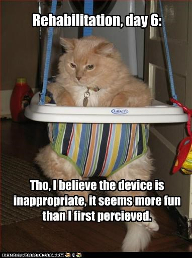 caption,captioned,cat,day,device,fun,inappropriate,journal,rehabilitation,six