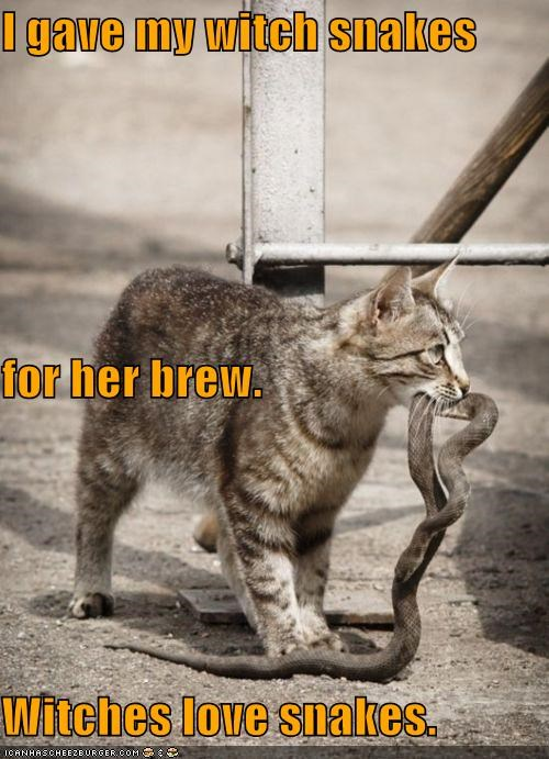 brew caption captioned cat gave meme snake snakes witch