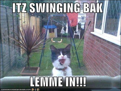 afraid back begging caption captioned cat do not want let me in request shouting swinging - 4948390144