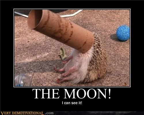 cardboard tube,hedgehog,hilarious,Telescope,the moon