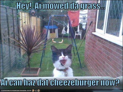 Cheezburger Image 4948864256