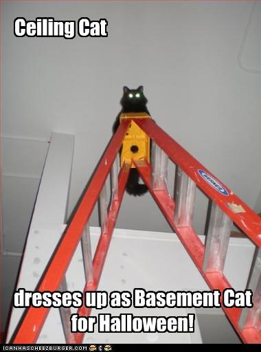 Ceiling Cat dresses up as Basement Cat for Halloween!