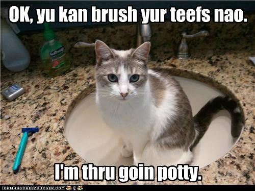 brush caption captioned cat done finished Okay permission potty sink teeth