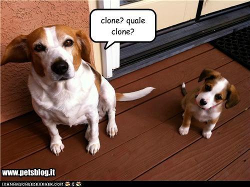 www.petsblog.it clone? quale clone?