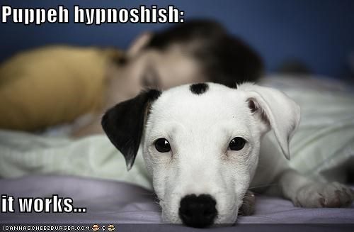 Puppeh hypnoshish: it works...