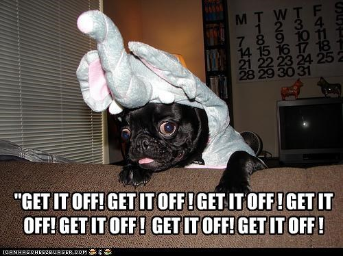 costume,couch,elephant costume,get it off,indoors,pug