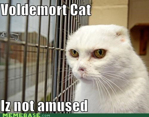 Cats,Harry Potter,kitten,Memes,movies,nose,voldemort