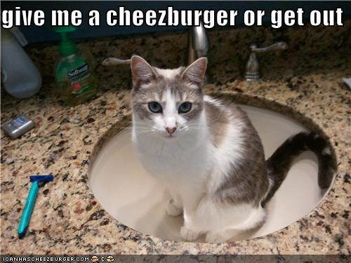 Cheezburger Image 4949739264