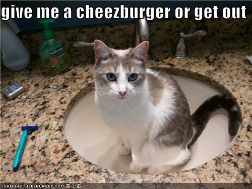 Cheezburger Image 4949739264