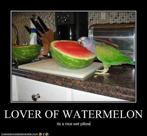 LOVER OF WATERMELON its a nice wet pillow