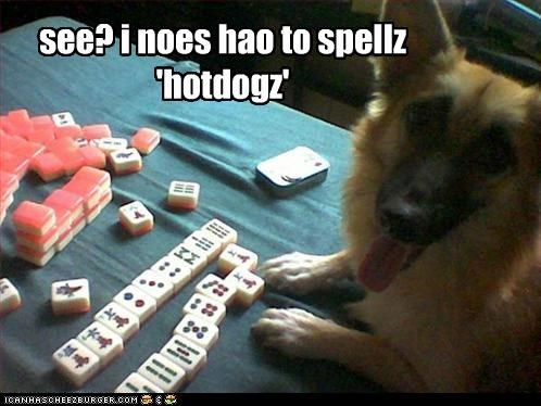 bed,german shepherd,happy,mahjong,mixed breed,proud,spelling