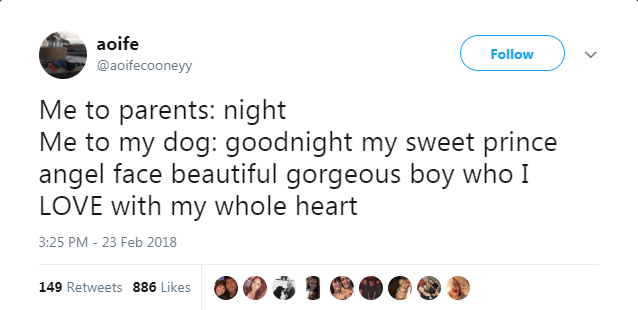 tweets funny animals - 4950277