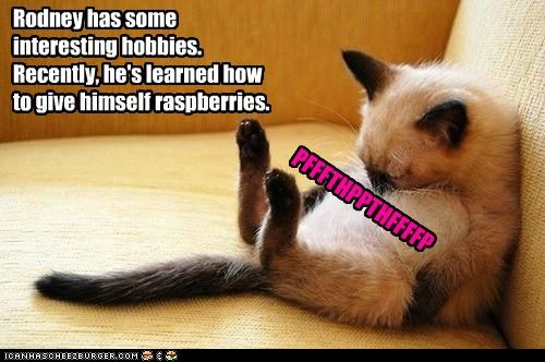 blowing caption captioned cat hobbies hobby interesting kitten raspberries