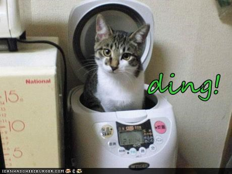 caption captioned cat cooking done timer - 4951096320