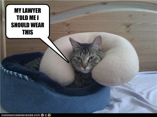 advice,brace,caption,captioned,cat,lawyer,neck,preparing