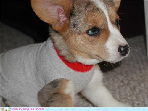 adorable makeshift pragmatism puppy reader squees sock sweater - 4951297536