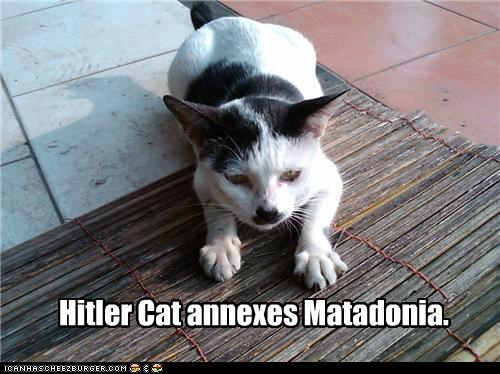 annexes caption captioned cat country hitler mat mustache pun - 4951740160