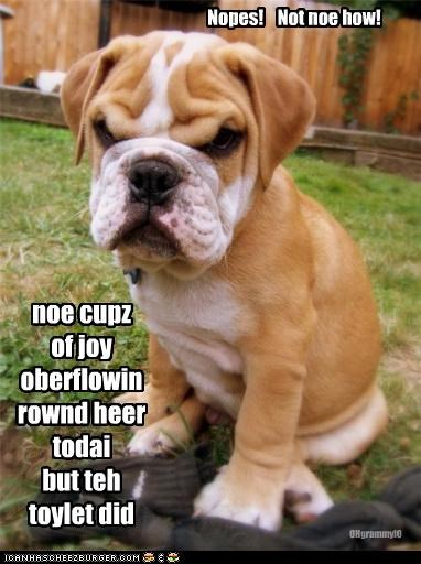 noe cupz of joy oberflowin rownd heer todai but teh toylet did Nopes! Not noe how! OHgrammyIO