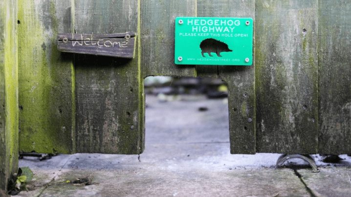 tiny highway London hedgehog - 4952325
