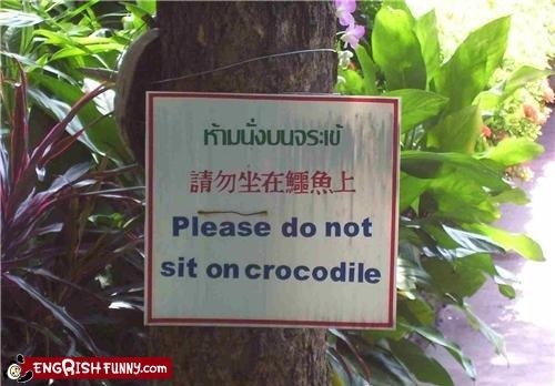 comfy chair,crocodiles,sign