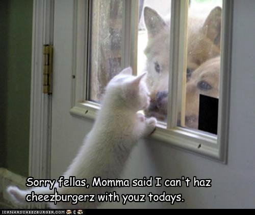 Cheezburger Image 4953508096