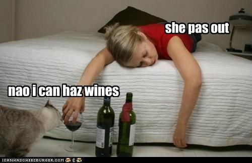 she pas out nao i can haz wines