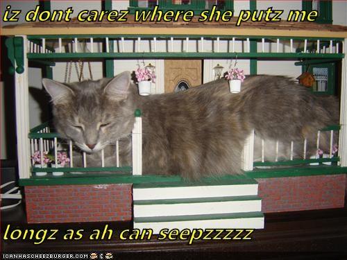 Cheezburger Image 4953871104