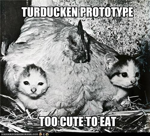 animals cat chicken funny Photo