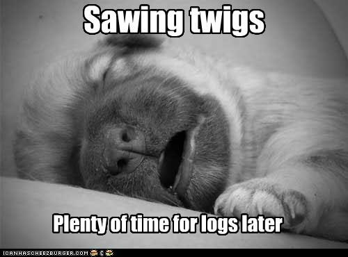nap nap time newborn puppy sawing twigs sleeping so precious whatbreed - 4953928192
