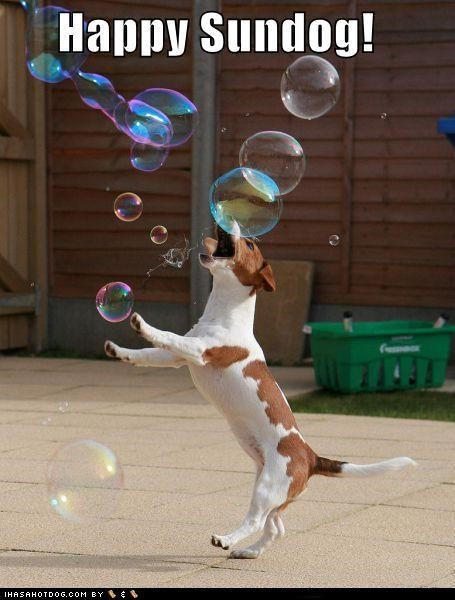 bubbles,happy sundog,jack russell terrier,outdoors