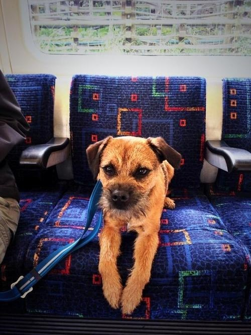 dogs buses cute funny - 4954117