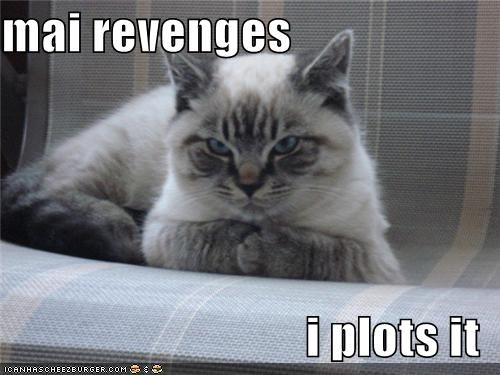 best of the week caption captioned cat evil Hall of Fame plotting revenge scheming - 4954148096