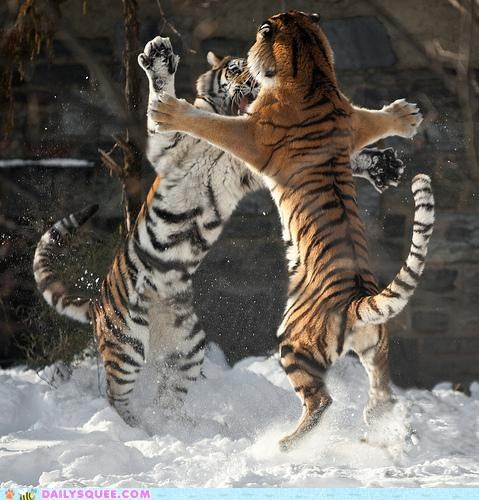 acting like animals child excited Father happy jumping son tiger tigers - 4954360576