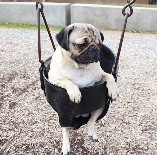 puppies in swings make for adorable dog pics