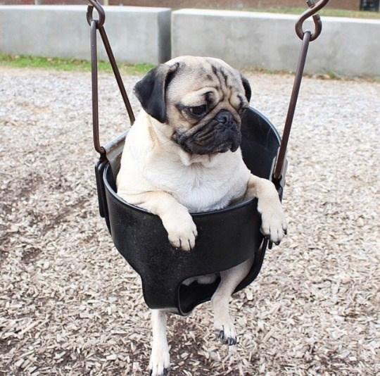 puppies cute swings - 4954373