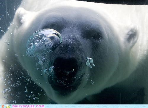 acting like animals,anecdote,bear,blowing,bubbles,bubbly,happy,optimist,optimistic,personality,polar bear,pun,underwater