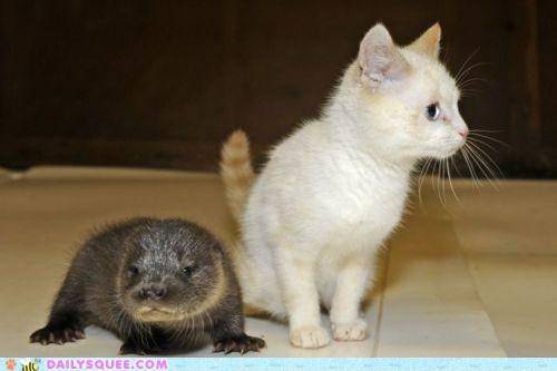 Babies,baby,cat,combination,comparison,Hall of Fame,kitten,otter,unlikely
