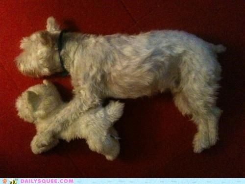 cuddling,dogs,friend,look alike,pun,stuffed animal,toy,twin,twins