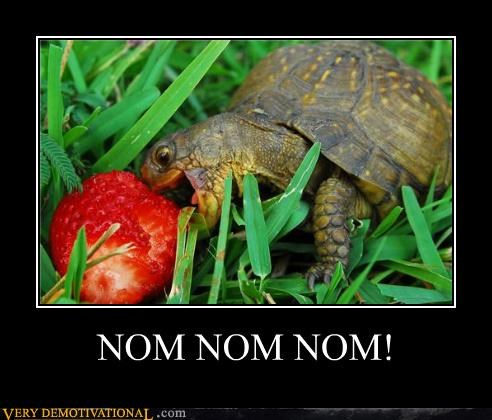 nom nom nom,Pure Awesome,strawberry,turtle