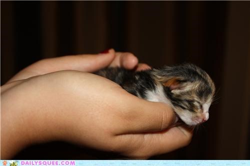 adorable,cat,itty bitty,kitten,newborn,reader squees,tiny