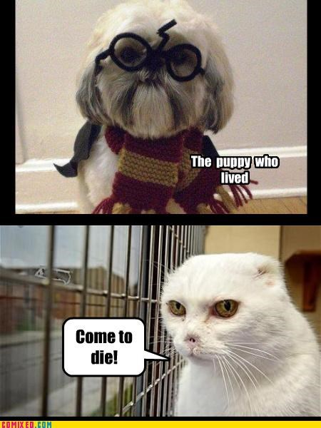 cat deathly hallows dogs Harry Potter voldemort - 4955883264