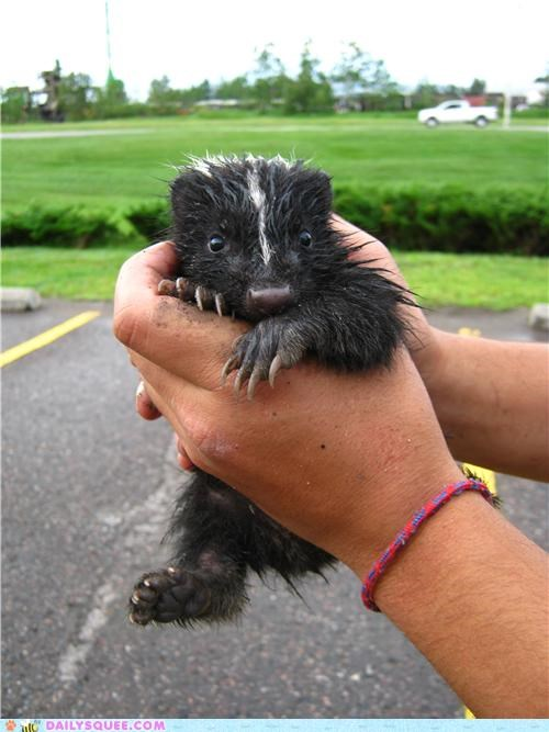 baby Good Samaritans Hall of Fame heartwarming pun reader squees rescue skunk terrible joke touching - 4956245504