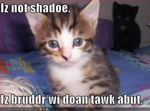 brothers kitten lolcats lolkittehs secrets shadows silence - 495667968