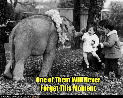 animal baby elephant funny kids Photo - 4956781056