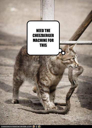 Cheezburger Image 4957493248