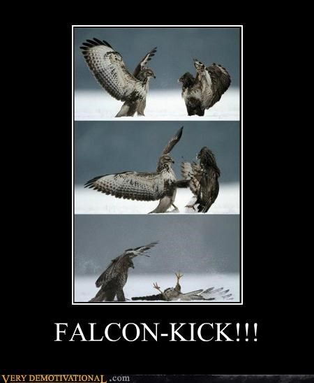 animals,birds,falcon,Hall of Fame,kick,Pure Awesome