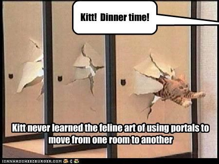 Kitt never learned the feline art of using portals to move from one room to another Kitt! Dinner time!
