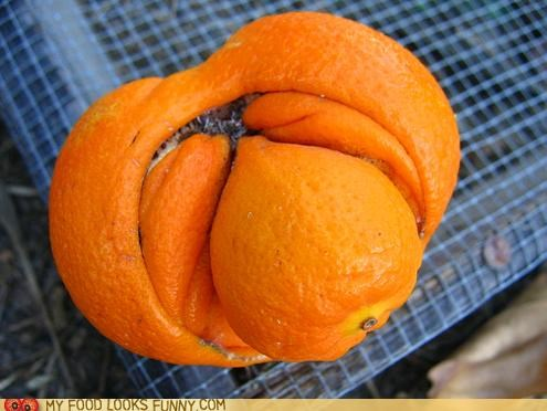 fruit Inception oange recursive - 4957914880